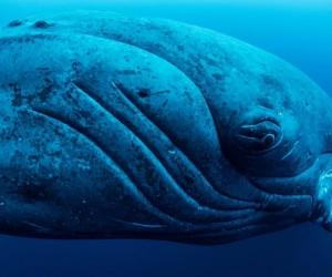 Жер бетін суытуда киттердің үлесі қандай?