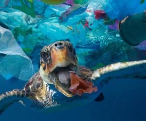 Пластик теңізде тіршілік көзіне айналып отыр