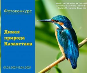 В Казахстане запущен фотоконкурс «Дикая природа Казахстана»