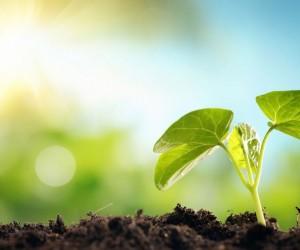 Қазақстанда 2021 жылды экология жылы деп жариялау ұсынылды