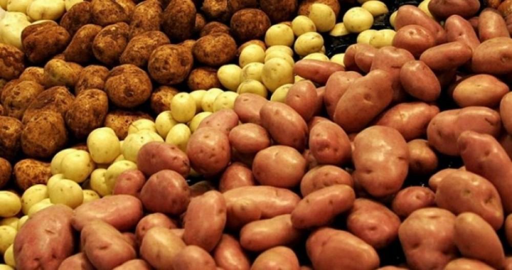 картоп, ауылшаруашылығы, баға, қымбатшылық, азық-түлік,