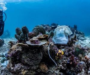 Пандемия басталғалы Филиппин рифтері бетперделерге толды