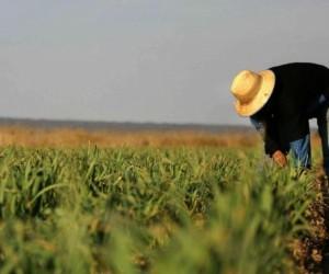 Қазақстанда қалай фермер болуға болады?