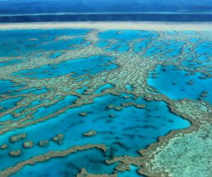 Правительство Квинсленда и HSBC сделают инвестиции для защиты Большого Барьерного рифа