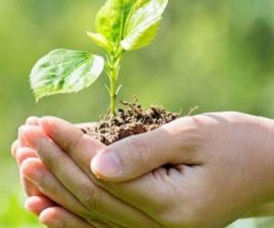 «Өсімдіктер әлемі туралы» жаңа заң қабылданбақ